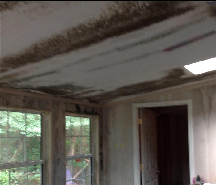 room with microbial growth on walls and ceiling